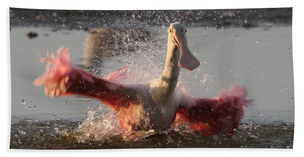 Fort Myers Beach Hand Towel featuring the photograph Bath Time - Roseate Spoonbill by Meg Rousher