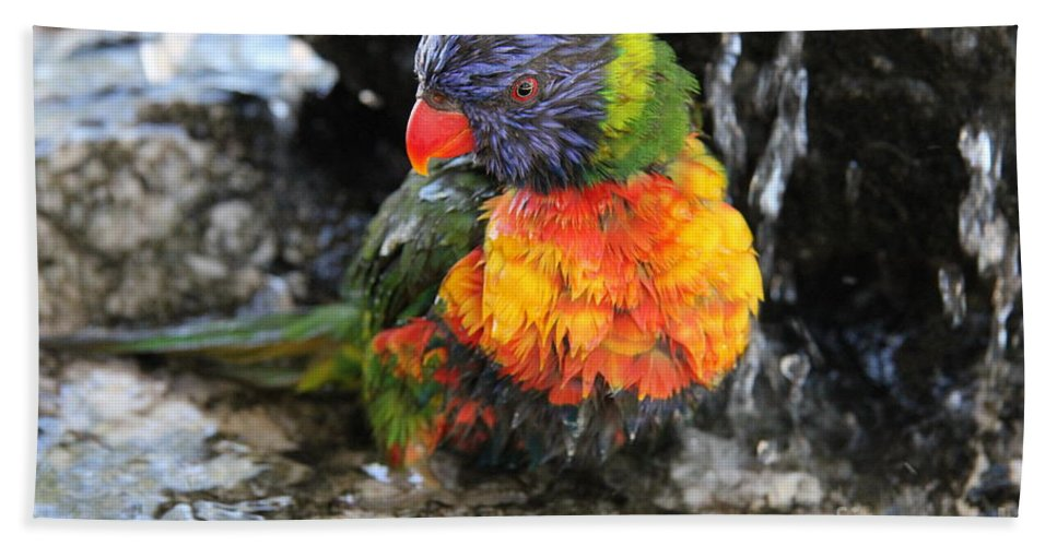 Parrot Hand Towel featuring the photograph Bath Time by Diane Greco-Lesser