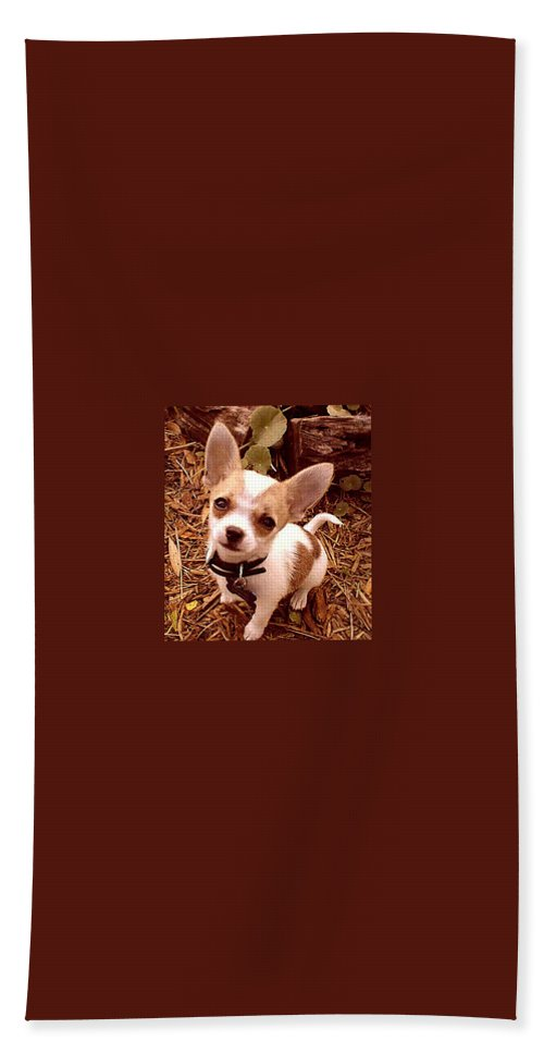 Chihuahua Hand Towel featuring the photograph Love Is All We Need by Leah Delano
