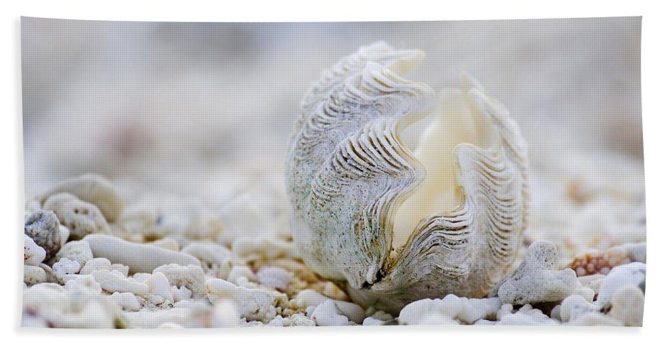 Clam Shell Bath Towel featuring the photograph Beach Clam by Sean Davey