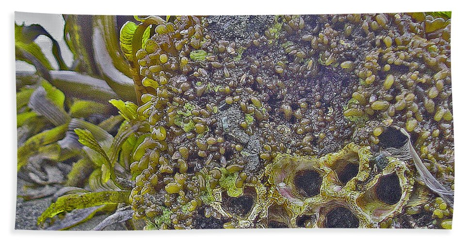 Seaweed Bath Sheet featuring the digital art Beach Skin 3 by Catherine Helmick