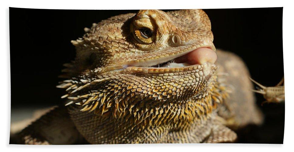 Bearded Dragon Bath Sheet featuring the photograph Bearded Dragon by Ernie Echols