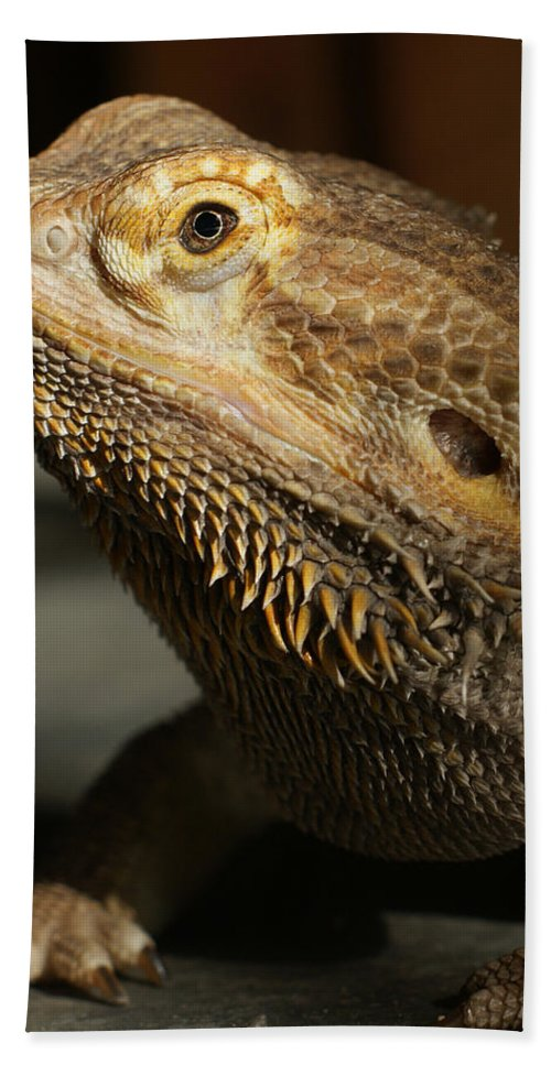 Bearded Dragon Hand Towel featuring the photograph Bearded Dragon Profile by Ernie Echols