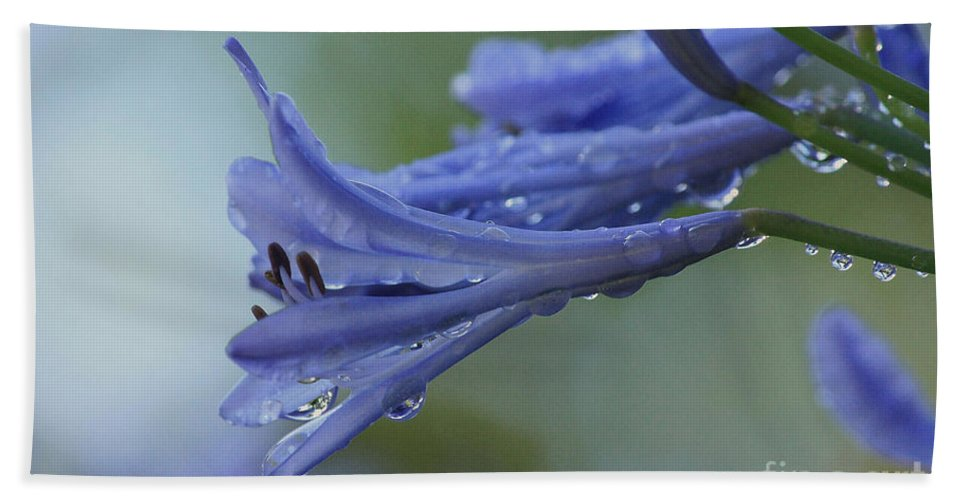 Agapanthus Bath Sheet featuring the photograph Beautiful Agapanthus by Luv Photography