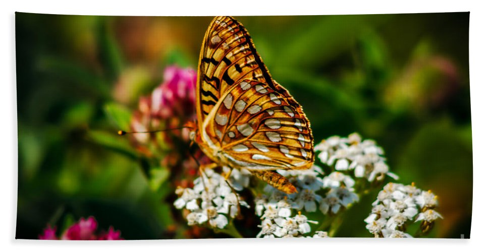 Butterfly Hand Towel featuring the photograph Beautiful Butterfly by Robert Bales