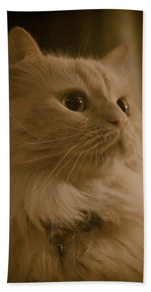 Bath Sheet featuring the photograph Beautiful Creamy Persian Cat Mix Portrait by Eti Reid