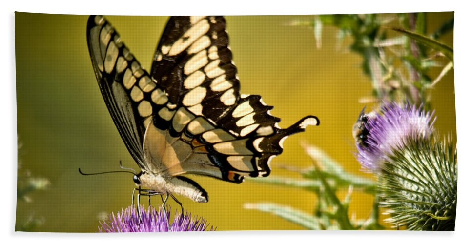 Giant Swallowtail Hand Towel featuring the photograph Beautiful Golden Swallowtail by Cheryl Baxter