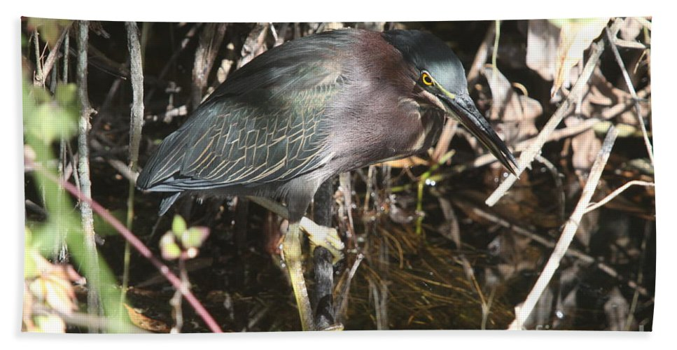 Little Green Heron Hand Towel featuring the photograph Beautiful Heron by Christiane Schulze Art And Photography