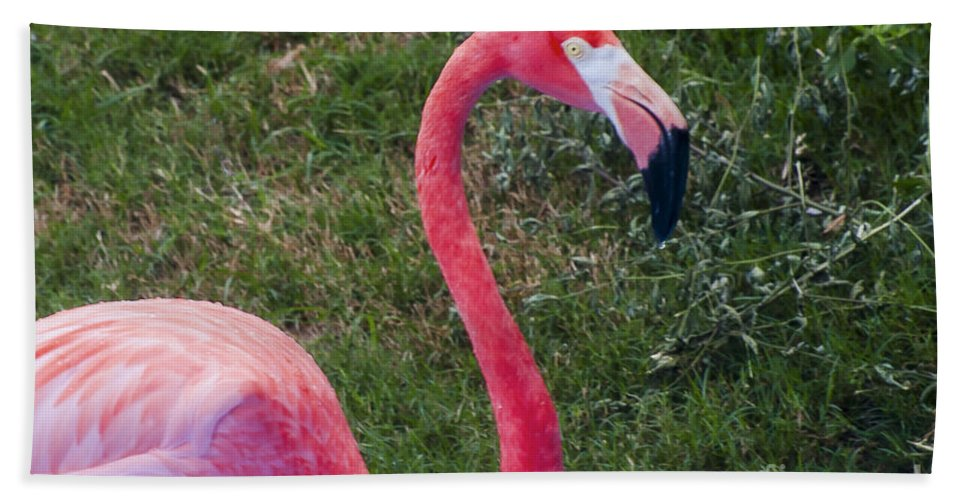 Flamingo Flamingos Bird Birds Animal Animals Creature Creatures Louisiana Purchase Gardens And Zoo Monroe Nature Hand Towel featuring the photograph Beautiful In Pink by Bob Phillips