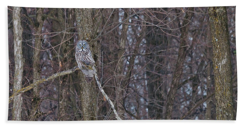 Owls Hand Towel featuring the photograph Beautiful Ornament by Cheryl Baxter