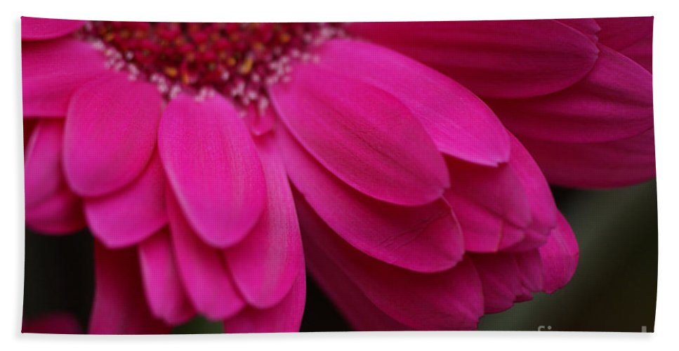Pink Hand Towel featuring the photograph Beautiful Petals by Carol Lynch