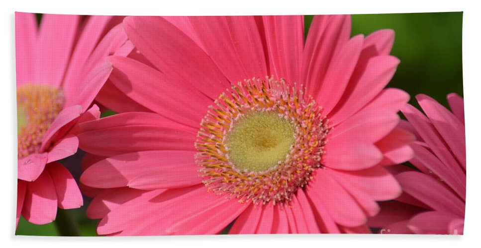Beautiful Pink Gerber Daisies Hand Towel featuring the photograph Beautiful Pink Gerber Daisies by Maria Urso