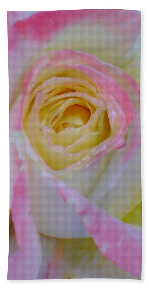 Rose Hand Towel featuring the photograph Beautiful Pink Rose Closeup by Taiche Acrylic Art