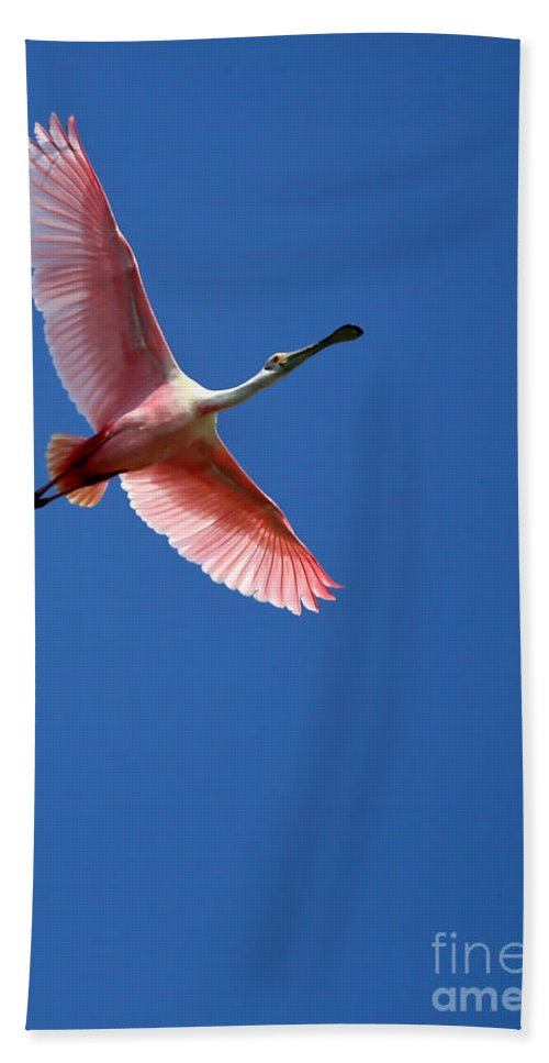 Winter Bath Sheet featuring the photograph Beautiful Pink Roseate Spoonbill by Sabrina L Ryan