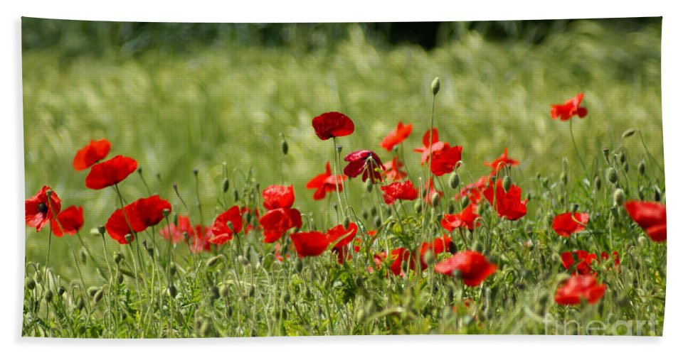 Poppies Hand Towel featuring the photograph Beautiful Poppies 1 by Carol Lynch