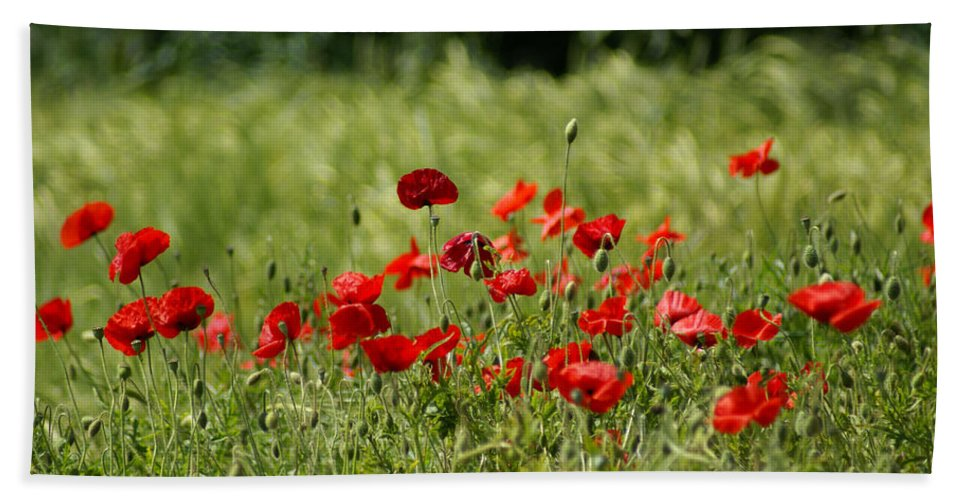 Poppies Hand Towel featuring the photograph Beautiful Poppies 3 by Carol Lynch