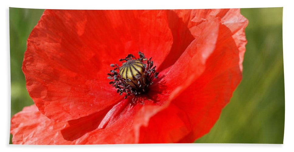 Poppies Bath Sheet featuring the photograph Beautiful Poppies 6 by Carol Lynch