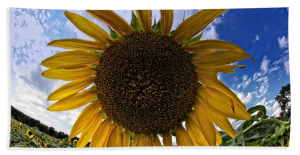 Sunflower Bath Sheet featuring the photograph Beautiful Sunflower by Alice Gipson