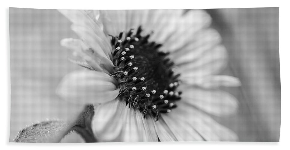 Sunflower Bath Sheet featuring the photograph Beautiful Sunflower In Monocrome by Vishwanath Bhat