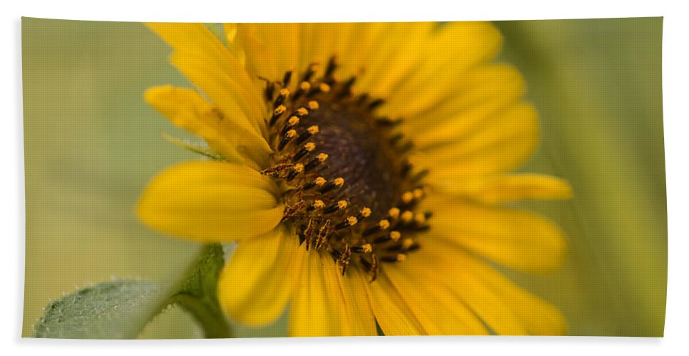 Sunflower Bath Sheet featuring the photograph Beautiful Sunflower by Vishwanath Bhat