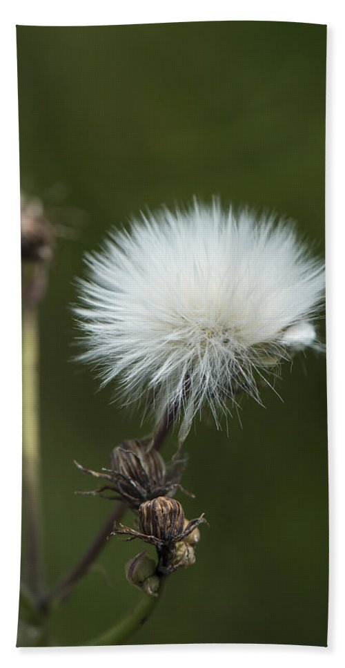 Beauty Hand Towel featuring the photograph Beauty Among The Thistles by Jayne Gohr