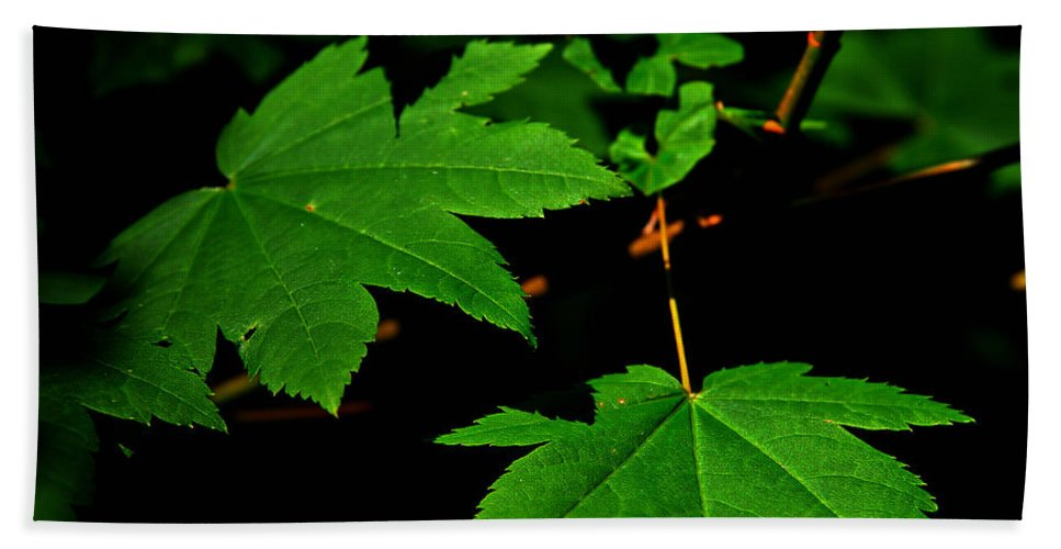 Foliage Hand Towel featuring the photograph Beauty In Nature by Jeanette C Landstrom