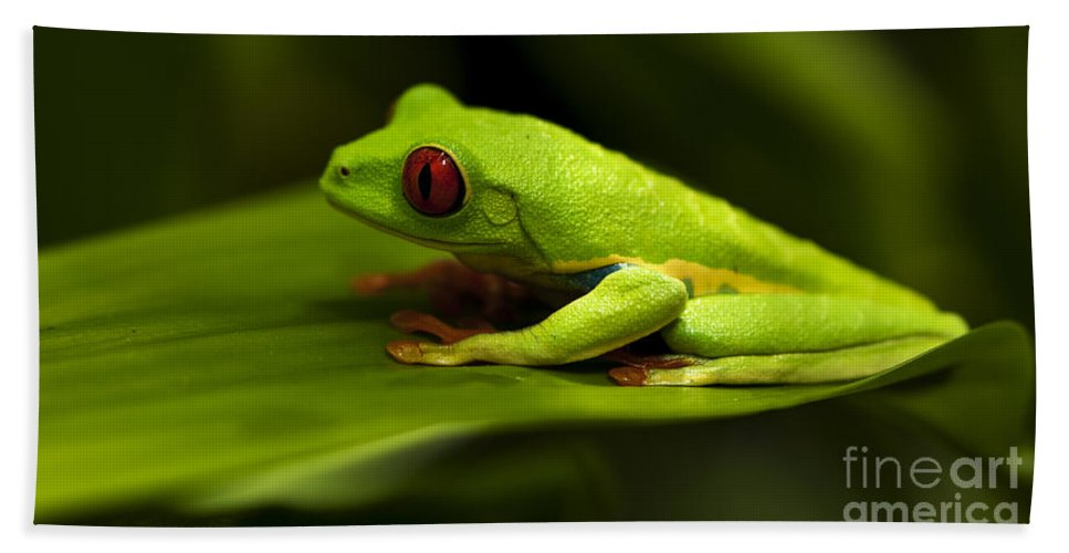 Frog Hand Towel featuring the photograph Beauty Of Tree Frogs Costa Rica 4 by Bob Christopher