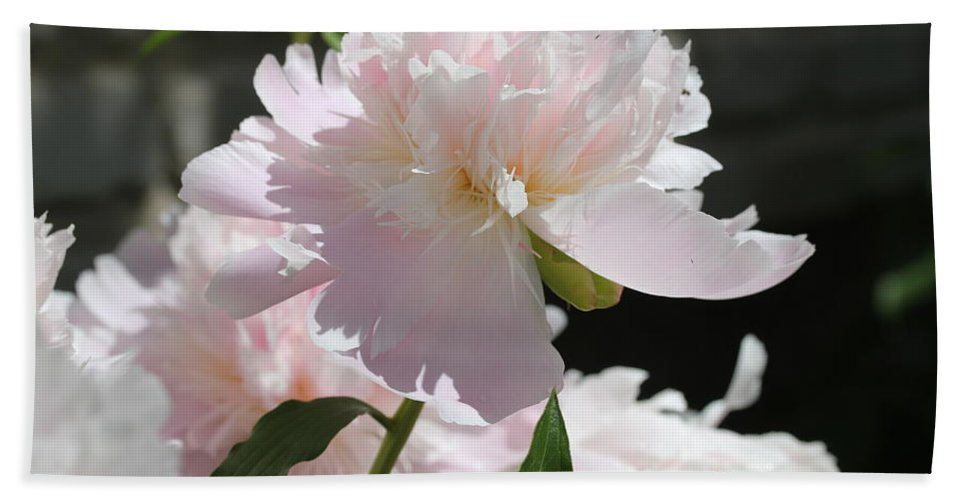 Peony Hand Towel featuring the painting Beauty by Ruth Kamenev
