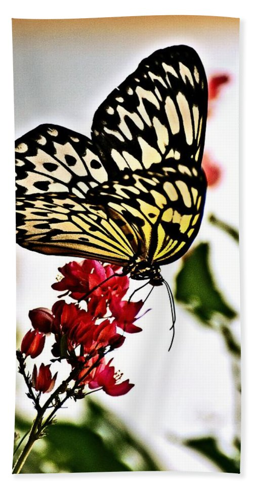 Butterfly Hand Towel featuring the photograph Beauty Wing by Marty Koch