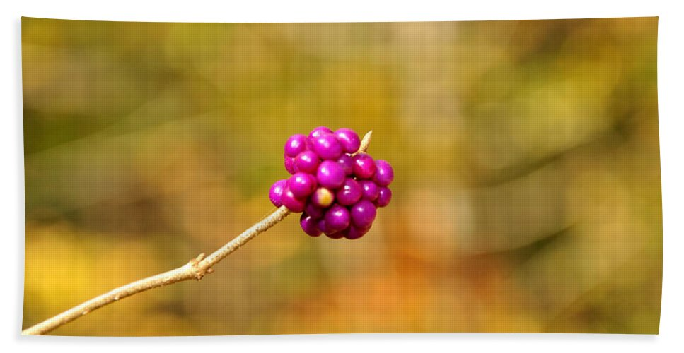 Single Hand Towel featuring the photograph Beautyberry by Sonja Dover
