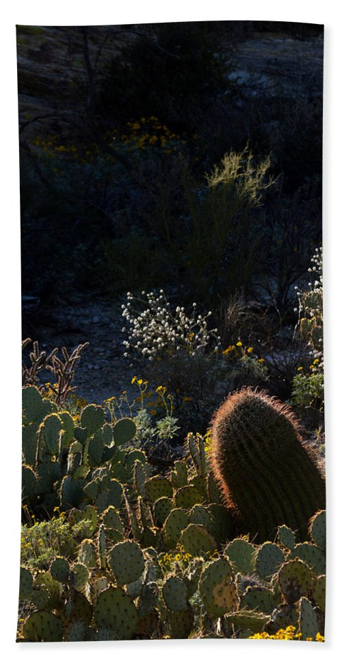 Cactus Hand Towel featuring the photograph Bed Of Cactus by Michael McGowan