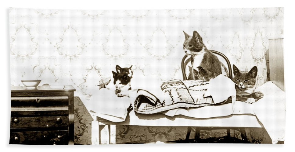 Fun With Cats Henry King Nourse Photographer 18801963 Hand Towel featuring the photograph Bed Time For Kitty Cats Histrica Photo Circa 1900 by California Views Mr Pat Hathaway Archives