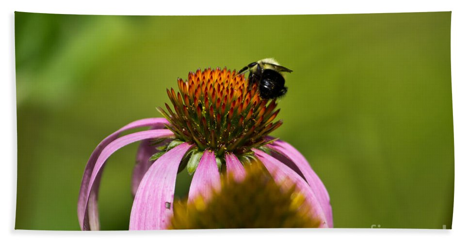 Insect Bath Sheet featuring the photograph Bee And Echinacea Flower by Ms Judi