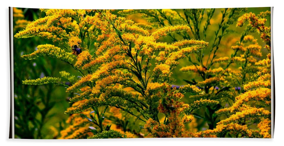 Flower Hand Towel featuring the photograph Bee And Goldenrod by Kathy Barney