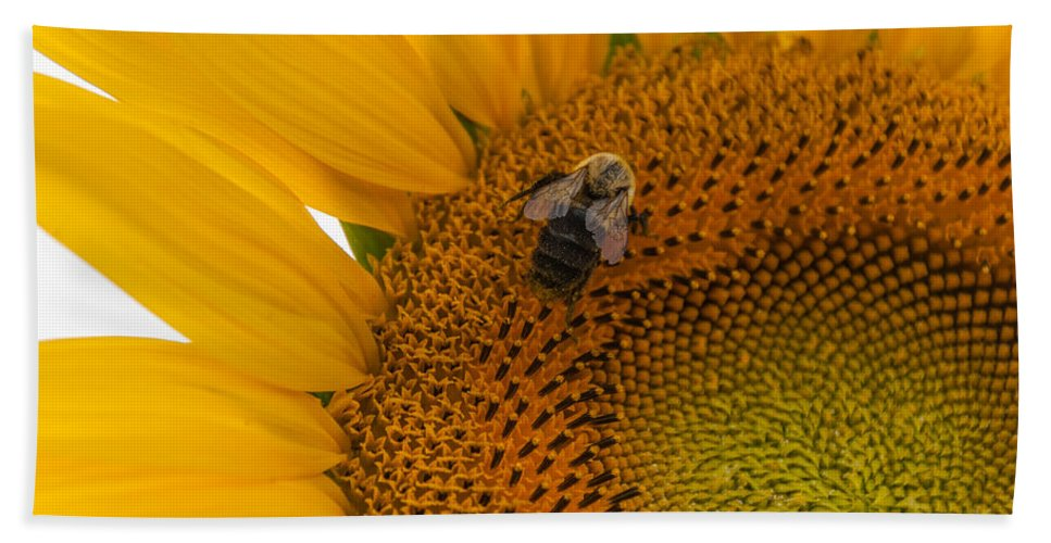 New Jersey Hand Towel featuring the photograph Bee Business by Kristopher Schoenleber