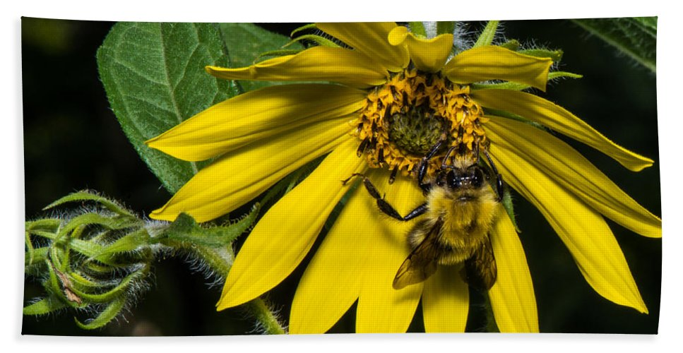 Wild Flower Bath Sheet featuring the photograph Bee In A Wild Flower by Paul Freidlund