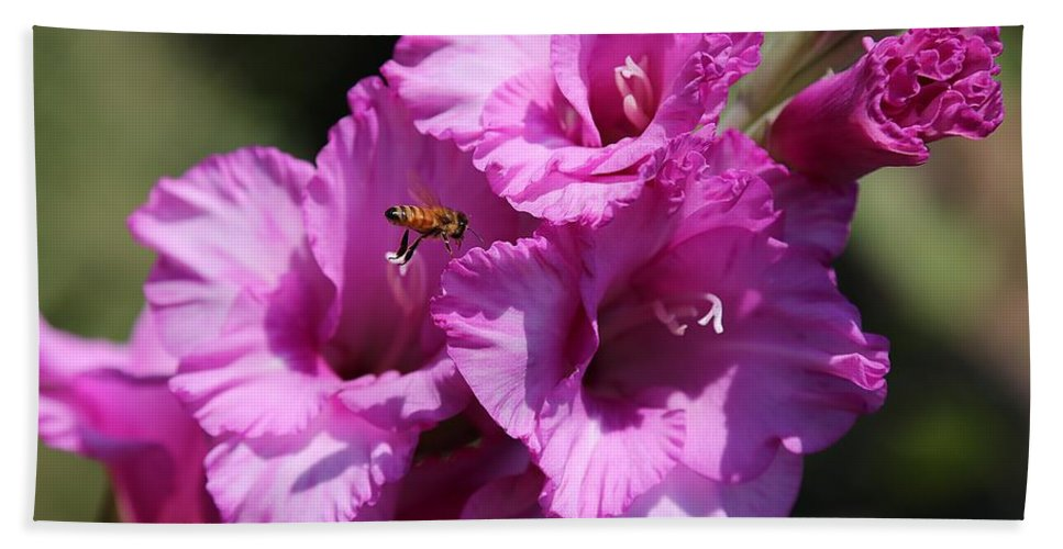 Bees Hand Towel featuring the photograph Bee In Pink Gladiolus by Carol Groenen