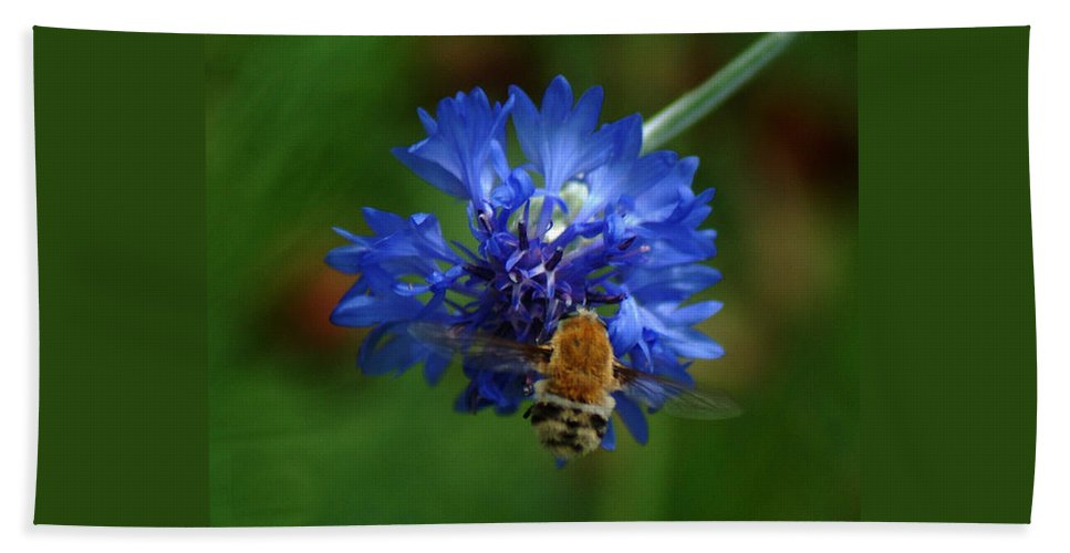 Bee Bath Sheet featuring the photograph Bee by Leticia Latocki