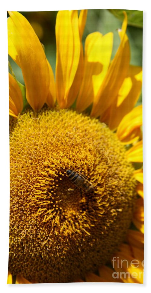 Sunflower Hand Towel featuring the photograph Bee Lunch by Christiane Schulze Art And Photography