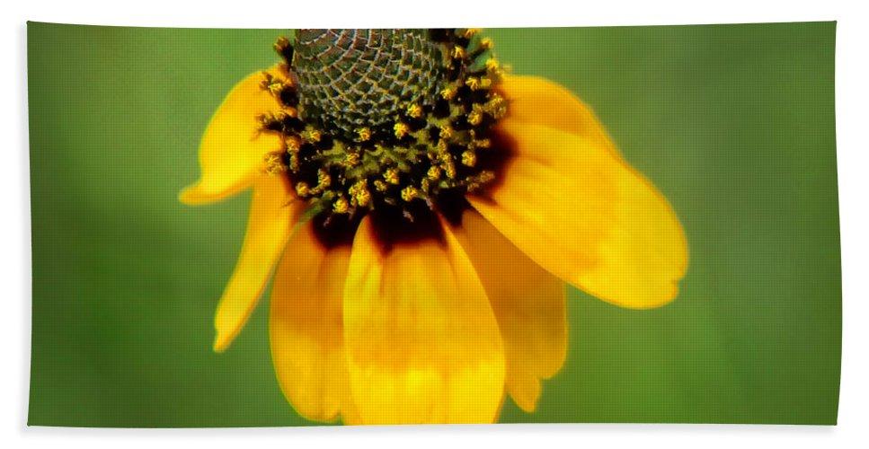Bee Hand Towel featuring the photograph Bee My Coneflower by Lucy VanSwearingen