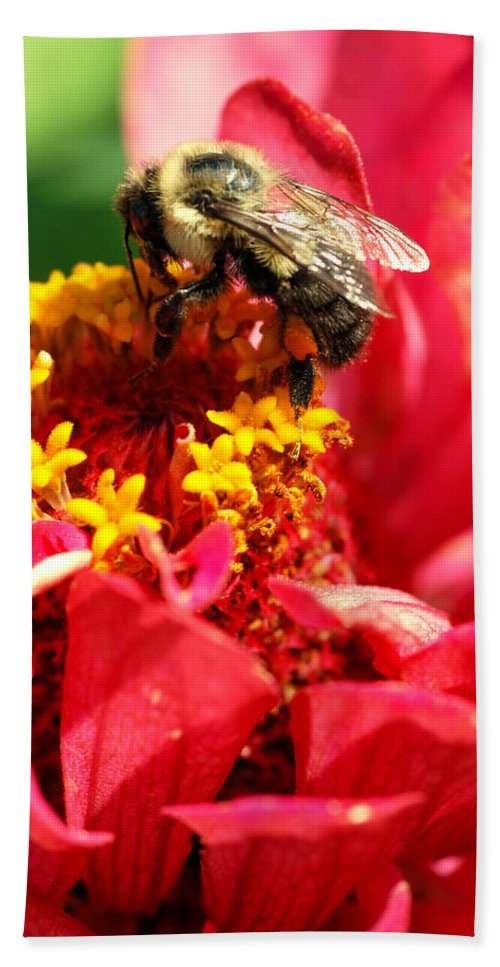 Zinnia Bath Towel featuring the photograph Bee On A Zinnia Flower by Optical Playground By MP Ray