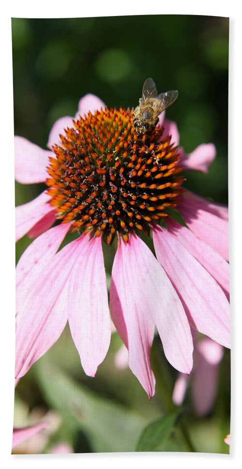 Coneflower Hand Towel featuring the photograph Bee On Coneflower by Christiane Schulze Art And Photography