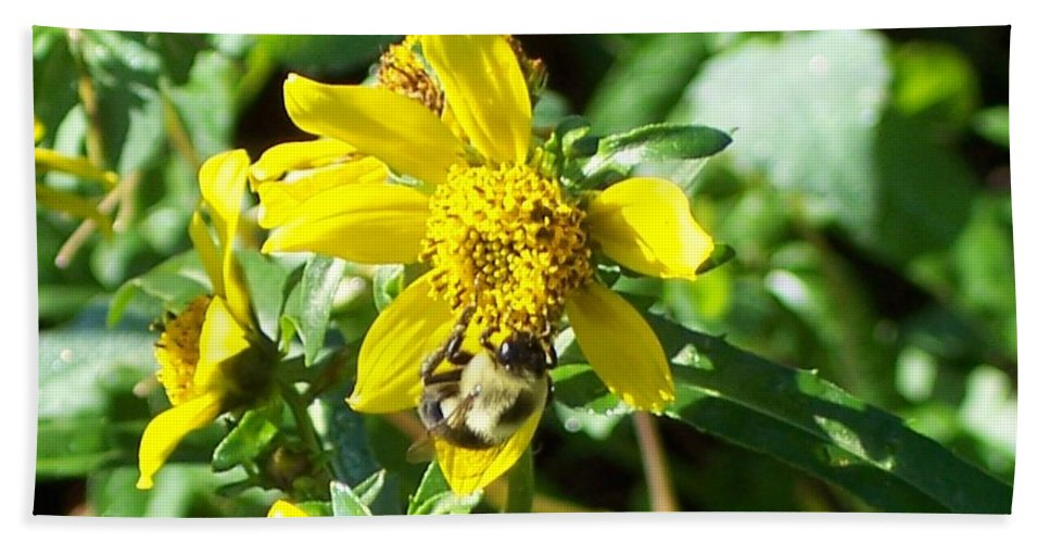 Bee Bath Towel featuring the photograph Bee On Flower by Michelle Miron-Rebbe