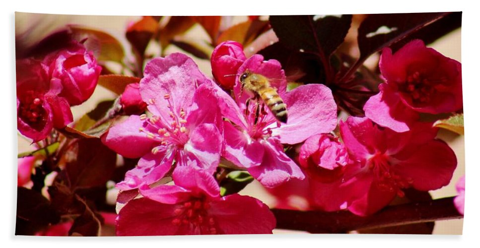 Bee Bath Sheet featuring the photograph Bee On Pink Blossoms 031015aa by Edward Dobosh