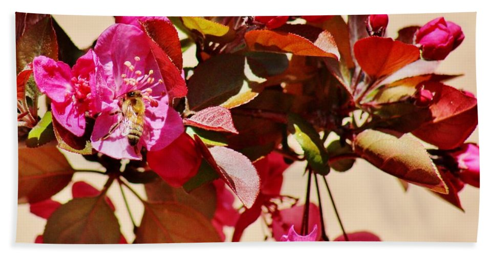 Wildlife Bath Sheet featuring the photograph Bee On Pink Blossoms 031015ac by Edward Dobosh