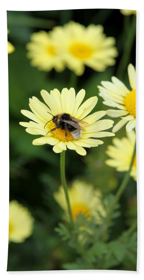 Marguerite Bath Sheet featuring the photograph Bee On Yellow by Christiane Schulze Art And Photography