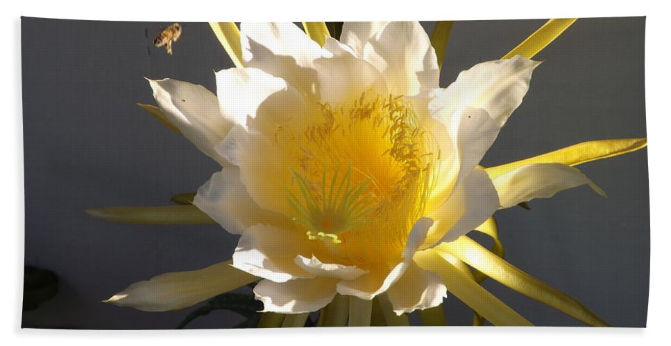 Dragon Fruit Hand Towel featuring the photograph Bee Pollinating Dragon Fruit Blossom by Jussta Jussta