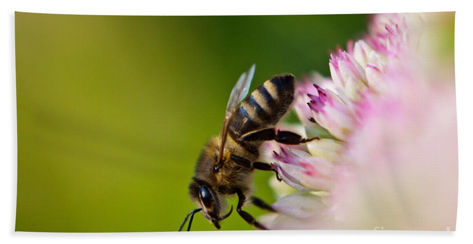 Animal Hand Towel featuring the photograph Bee Sitting On A Flower by John Wadleigh