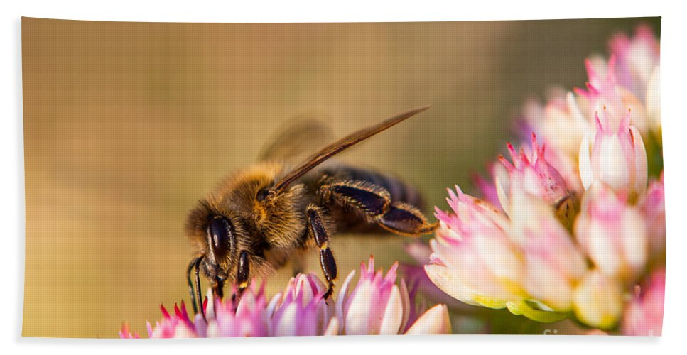 Animal Hand Towel featuring the photograph Bee Sitting On Flower by John Wadleigh