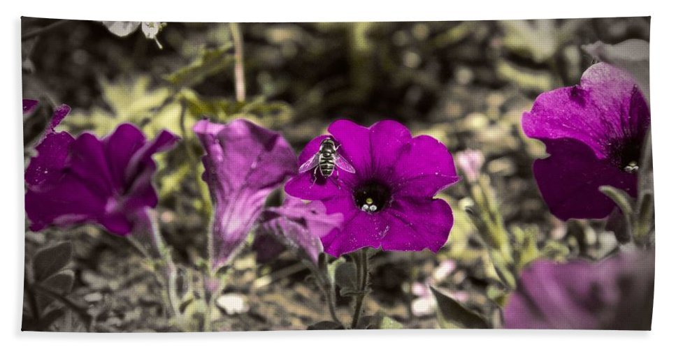 Flower Hand Towel featuring the photograph Bee To A Flower by Tom Gari Gallery-Three-Photography